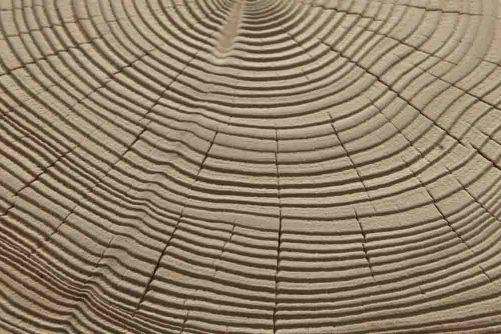 A8 - cedro sabbiato